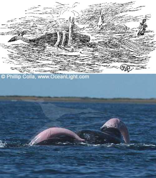 seaserpentwhalepenis fortianismo ciencia