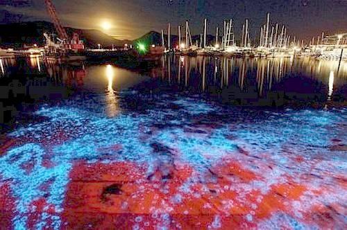 bioluminiscencia43.jpg