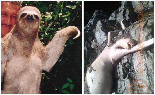 cerroazul_sloth