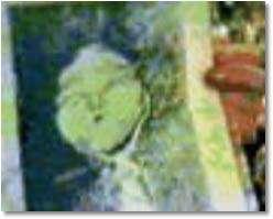 Marina Popovich mostrando a famosa foto diante das câmeras de televisão.