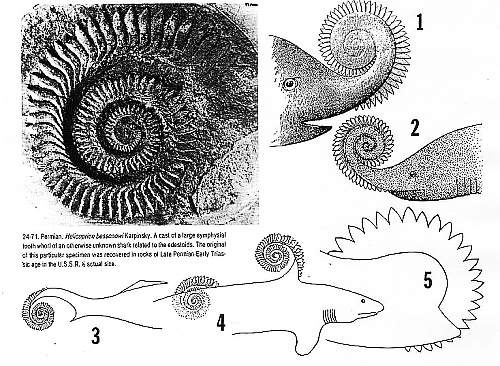 fish_helicoprion_shark_tooth_pic432fs